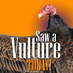 Turkey Vulture-01